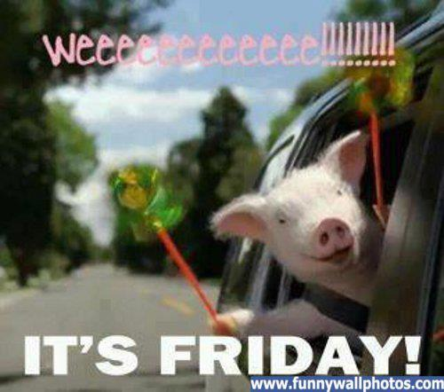 Happy friday comedy day piglove