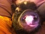 Bacon Kiss