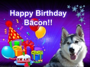 Happy Surprise Birthday Party Bacon! (1/6)