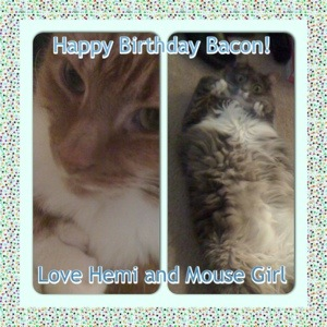Happy Surprise Birthday Party Bacon! (5/6)