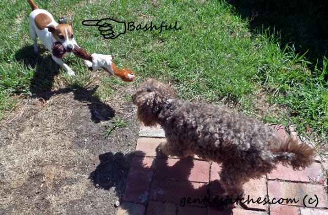 """Jack, Tricky and Bashful enjoy a game of """"squirrel"""""""