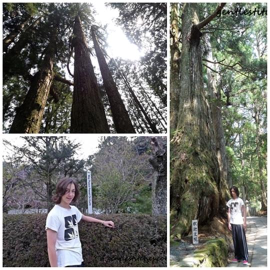 forest and Okunion of Mount Koya
