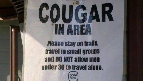 how to find cougars in my area